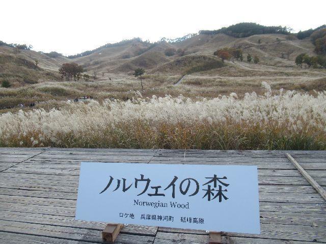f:id:akizo_da:20201107130427j:plain