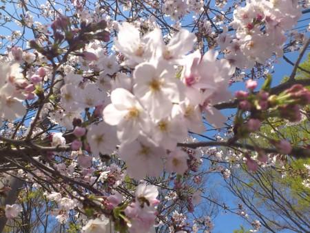 f:id:akizukid:20120401131336j:image