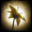 f:id:akusum26:20200419103940p:plain