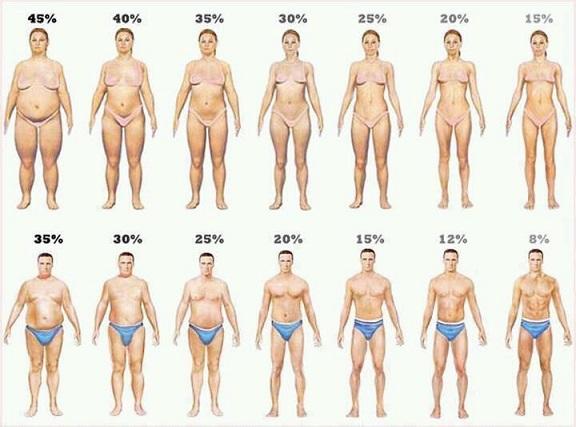 筋肉量の平均はこれ!筋肉量の標準を測定して必要な筋トレを考えよう!