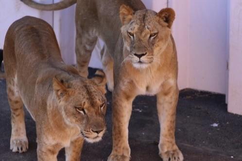 Zoo raion
