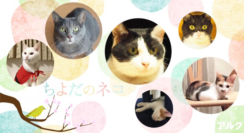 ネコ英語「ちよだのネコ」 ちよだニャンとなる会