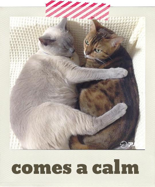 猫英語ネコ英語