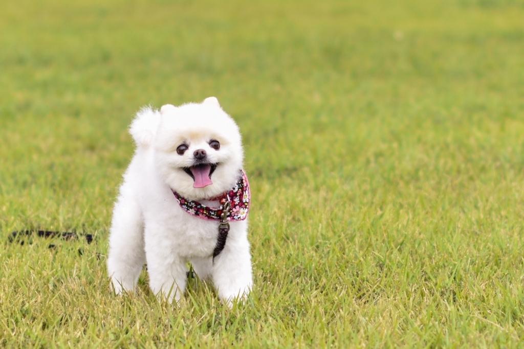 「ぼく犬派です」動物愛護週間