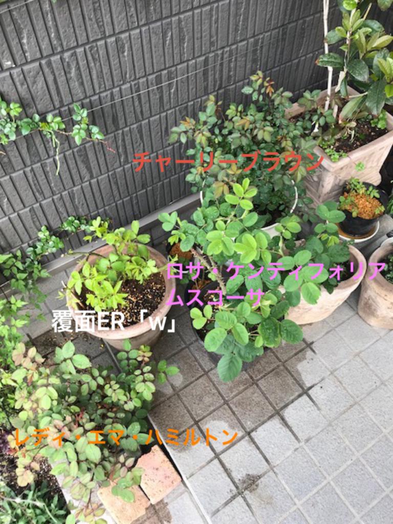 f:id:algernonab:20180404212955p:plain
