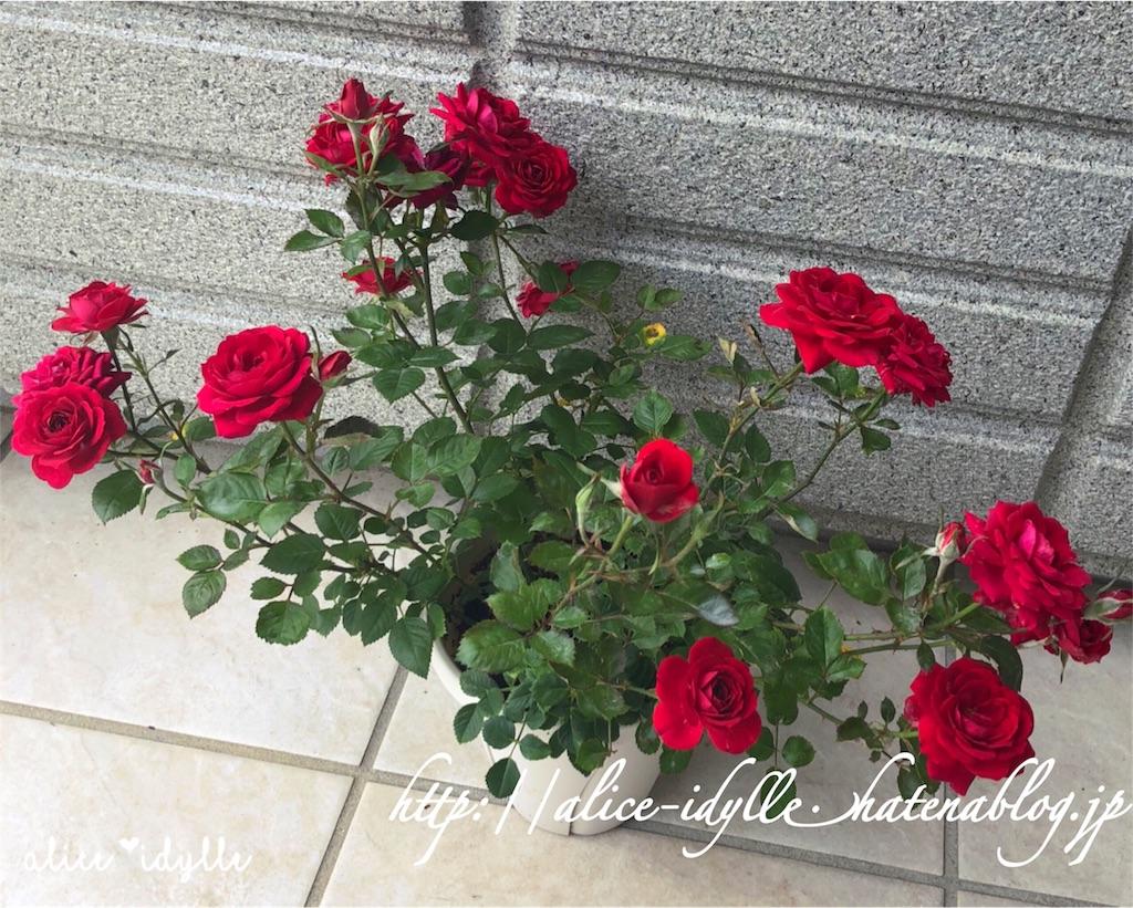 f:id:alice85:20190206105318j:image