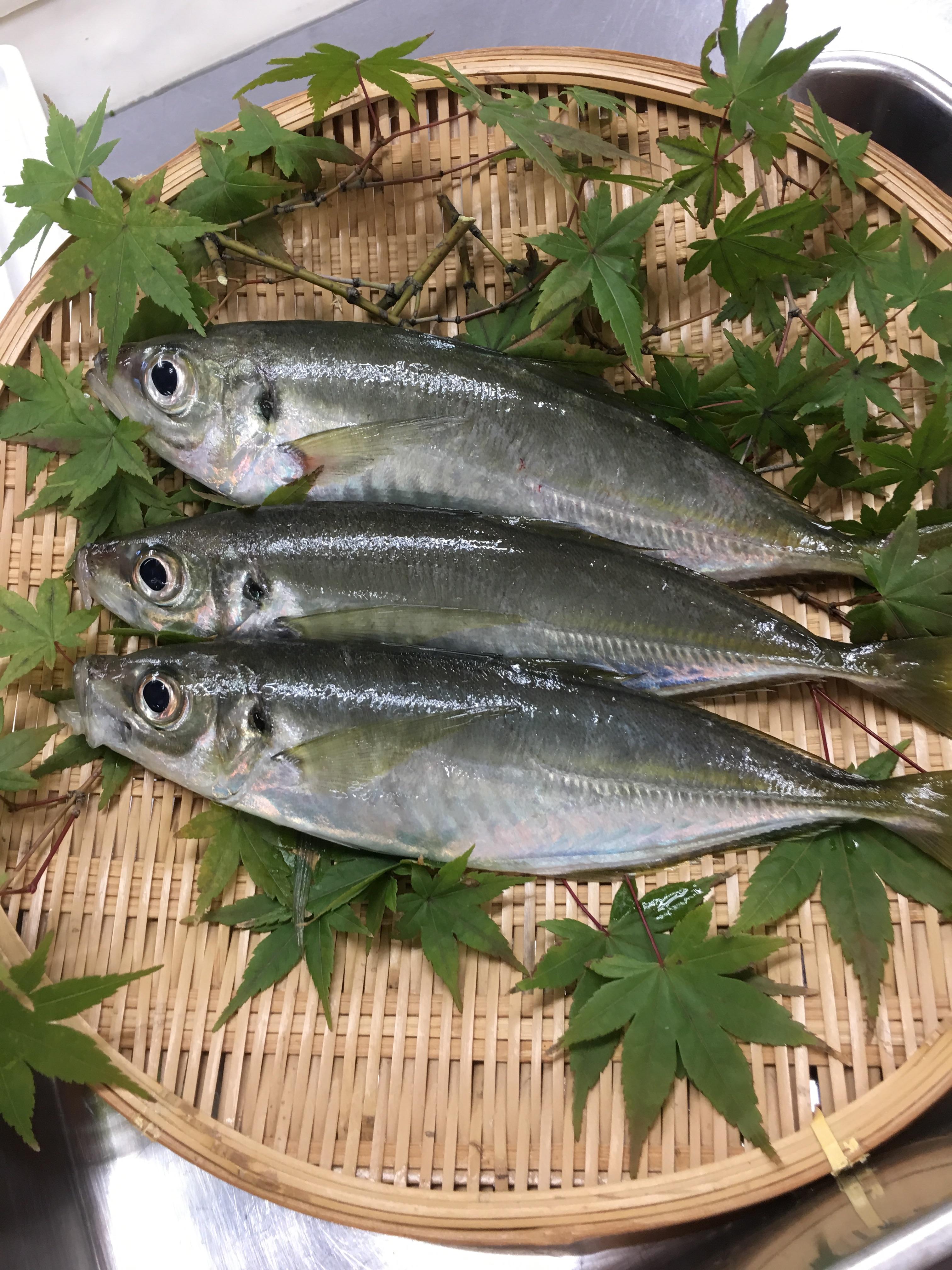 f:id:allergy_nagasakikko:20171105130429j:image