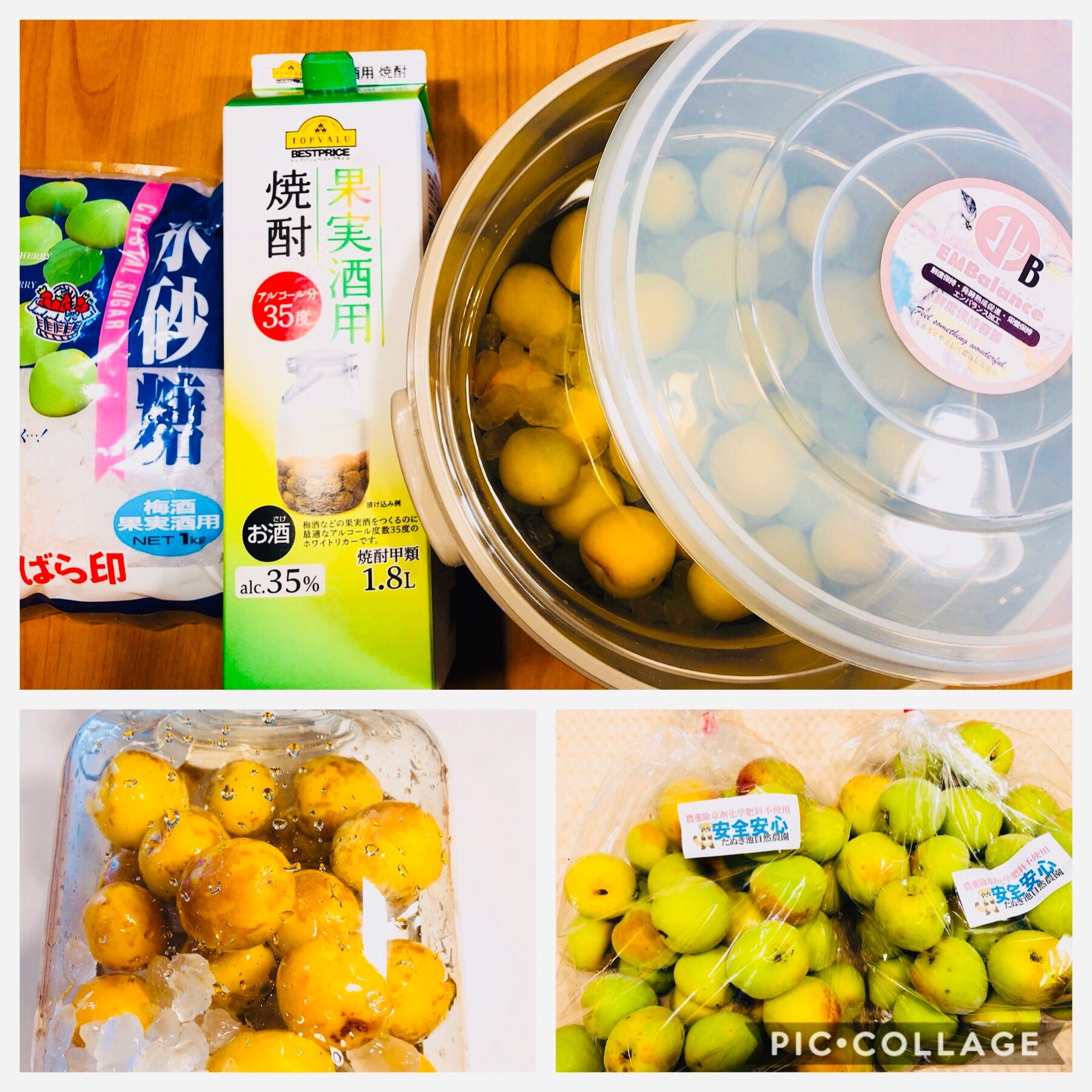 f:id:allergy_nagasakikko:20190611180323j:image