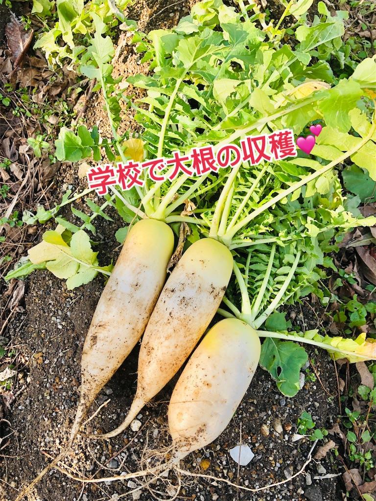 f:id:allergy_nagasakikko:20210115231256j:image