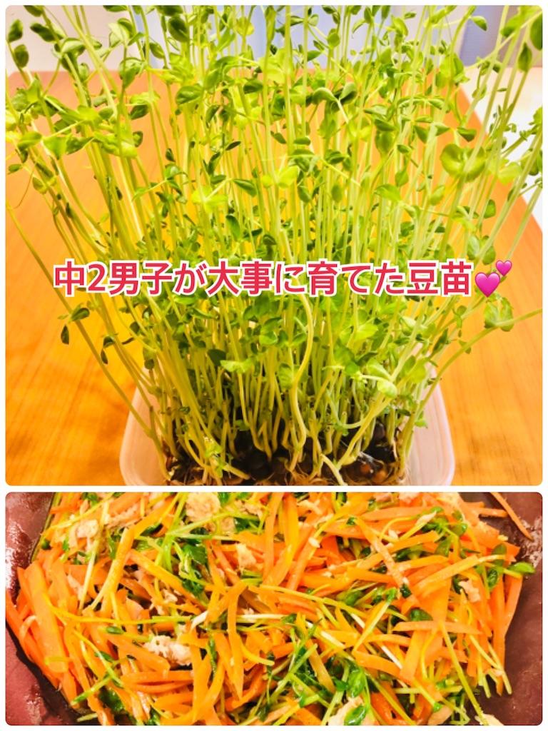 f:id:allergy_nagasakikko:20210203193627j:image