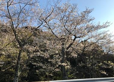 f:id:ally-hataotocafe:20190409132858j:plain
