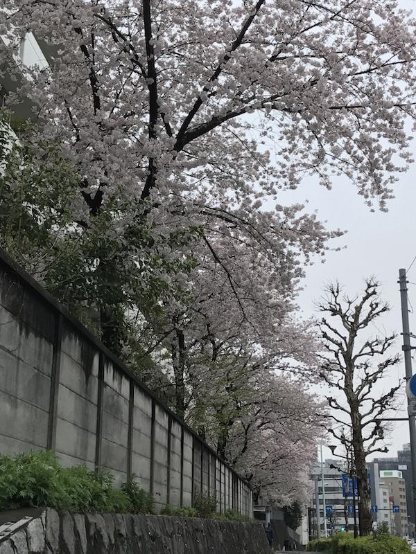 20170408_2.jpg