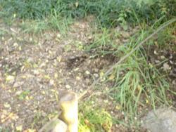 f:id:aloha_4649:20101116223158j:image:left
