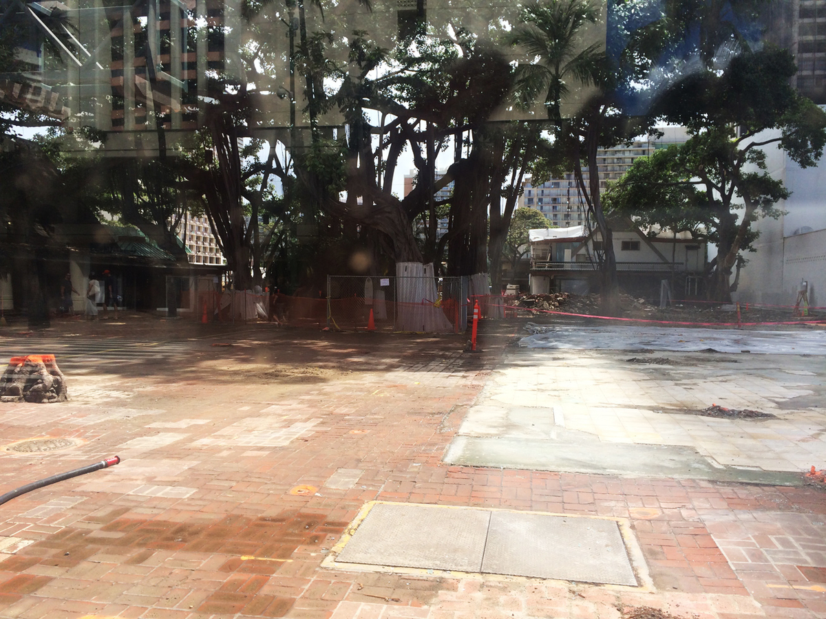 工事中、保護されていたバニヤンツリー