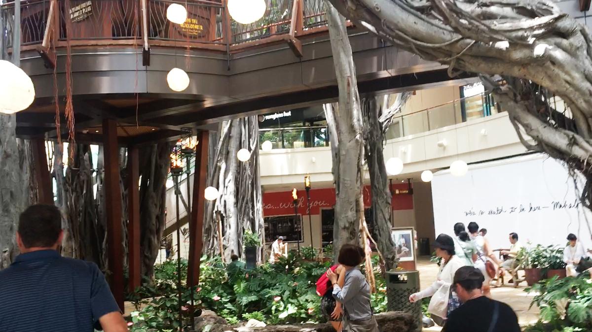 インタマのシンボル的なバニヤンツリー