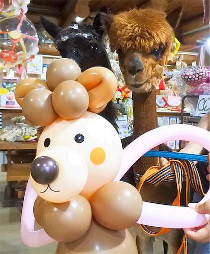 f:id:alpacapaca_balloonshop:20190717201959j:image