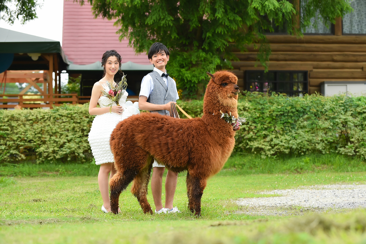 アルパカと結婚式前撮り写真撮影
