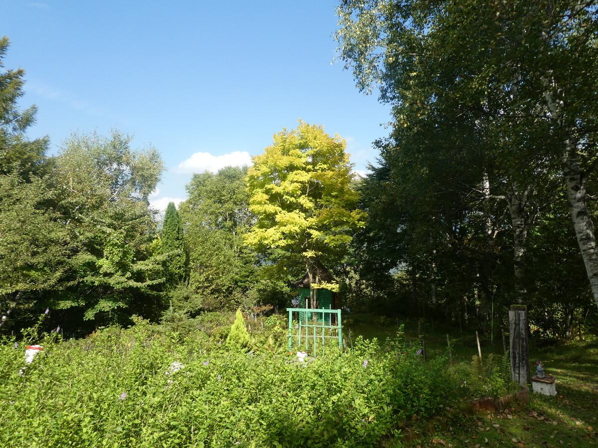 f:id:alpenflora:20210915141936j:plain