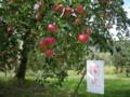 [大子シュッポ]陽光。ものによって、桃のような色気あるピンク色も