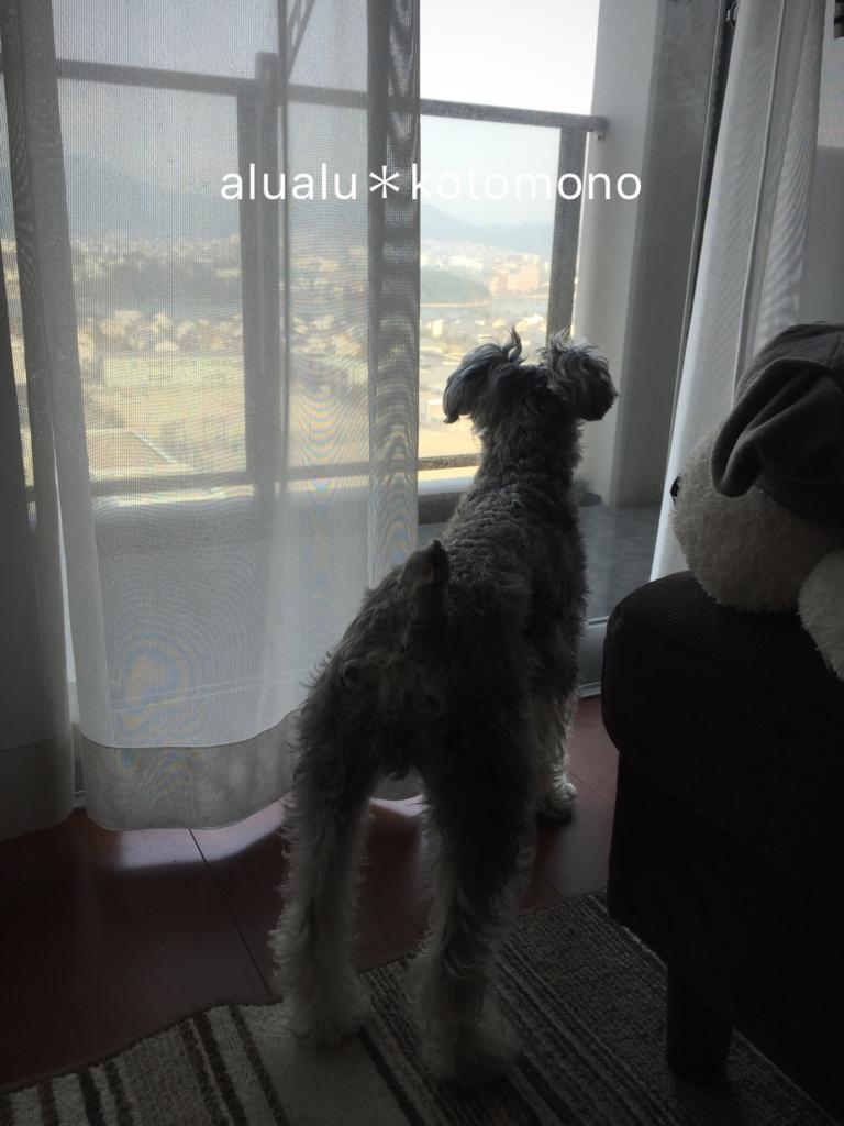 f:id:alualu0312:20170217152522j:plain