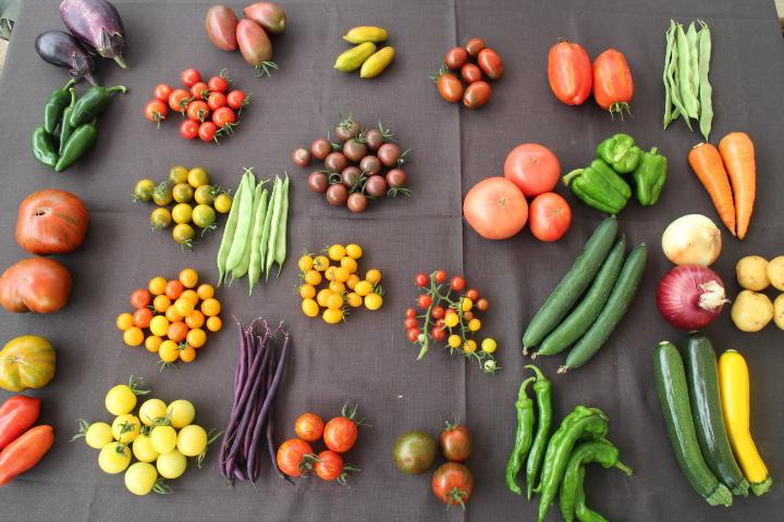 美味しい植物園ー今日の収穫