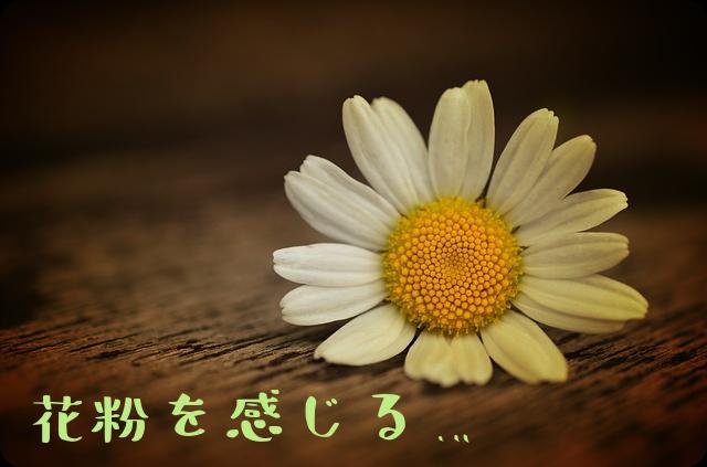 f:id:amai310mizu:20190219190022p:plain