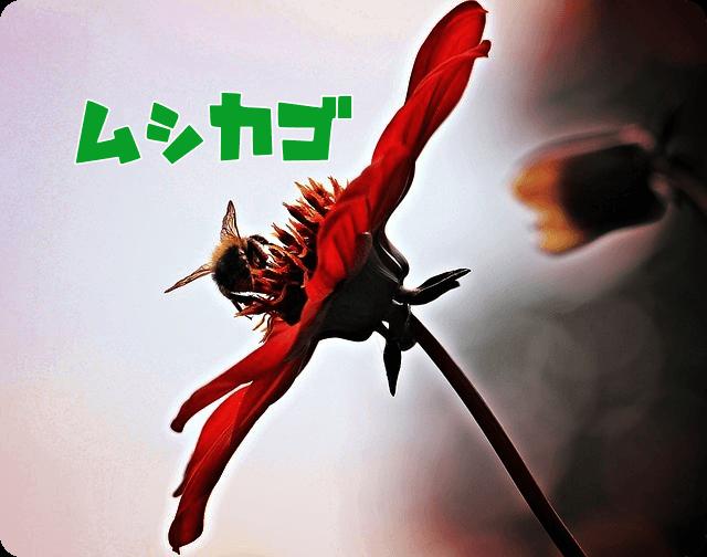 f:id:amai310mizu:20190516165650p:plain