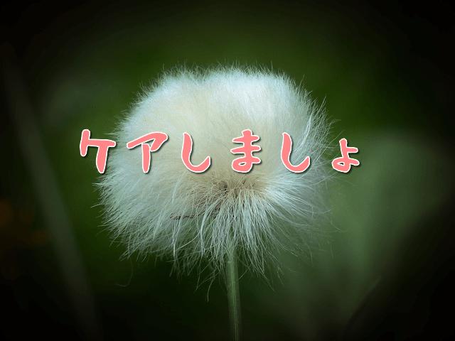 f:id:amai310mizu:20190928113458p:plain
