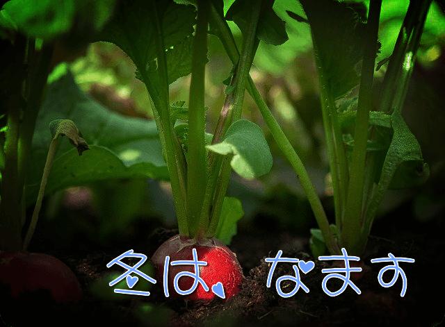 f:id:amai310mizu:20191205035824p:plain