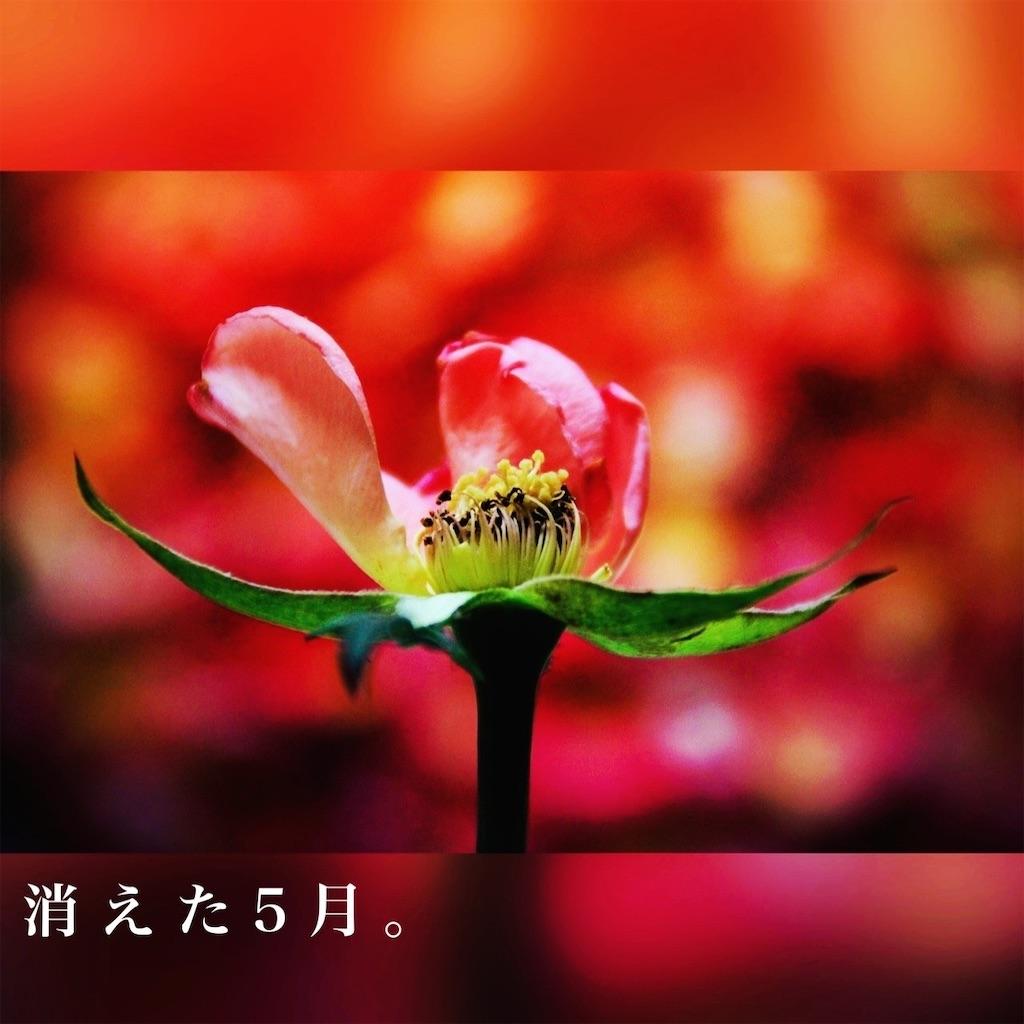 f:id:amai310mizu:20210505191335j:image
