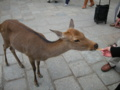 [amakko]鹿