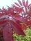 白根の紅葉