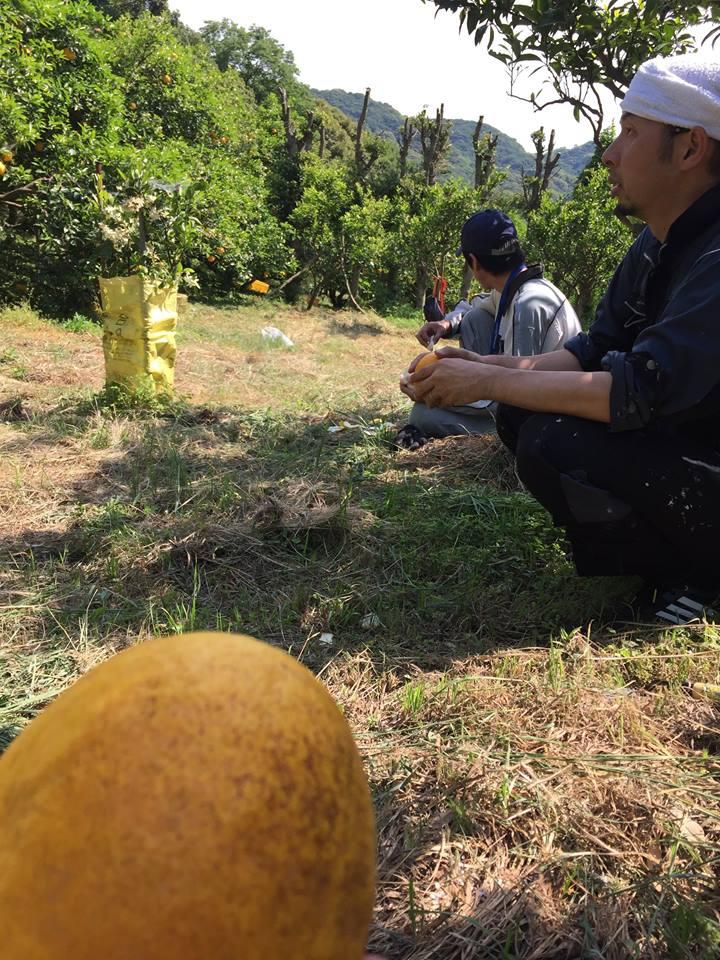 f:id:amanada-awaji:20170524151134j:plain