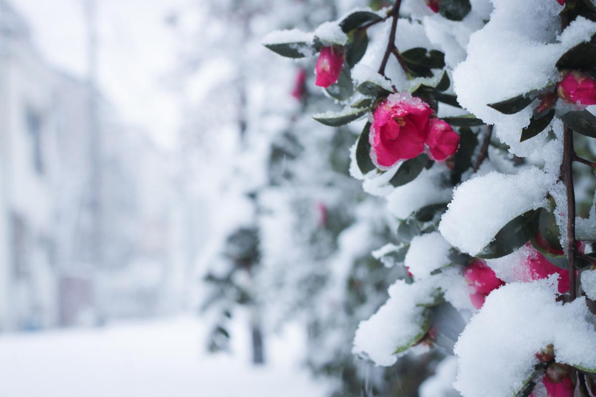 """""""雪が溶けたら春が来る""""というふうに表現する人もいるくらいですしね!"""