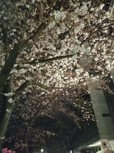 f:id:amaneukiyo:20170404224729j:image