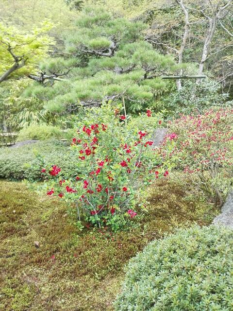 f:id:amaneukiyo:20170419150531j:plain