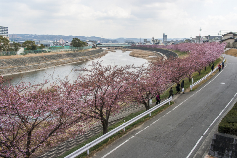 f:id:amano_shintaro:20170309151426j:plain