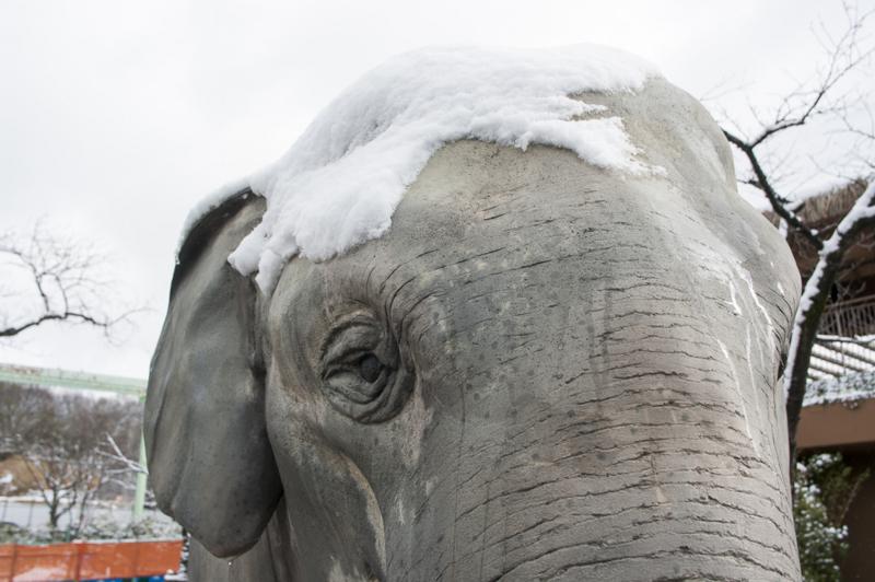 東山動植物園の象の像