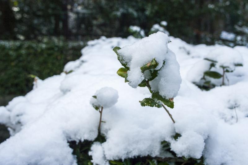 雪の精 東山動植物園 積雪
