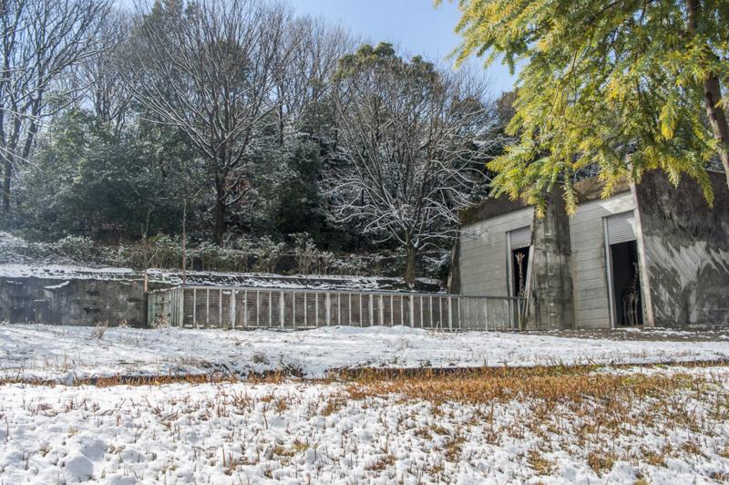 東山動植物園 キリン 雪