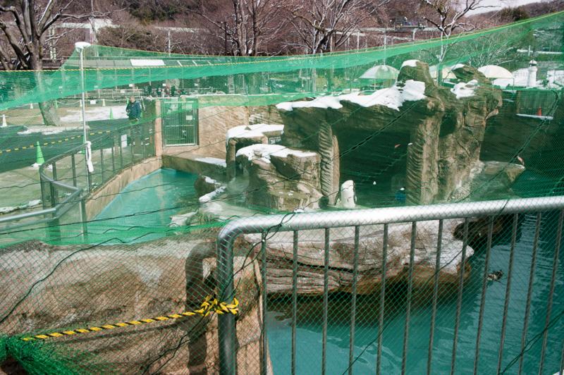 東山動植物園の鳥インフルエンザ対策中のペンギンエリア