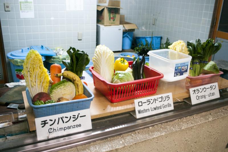 ローランドゴリラ 新鮮野菜 エサ