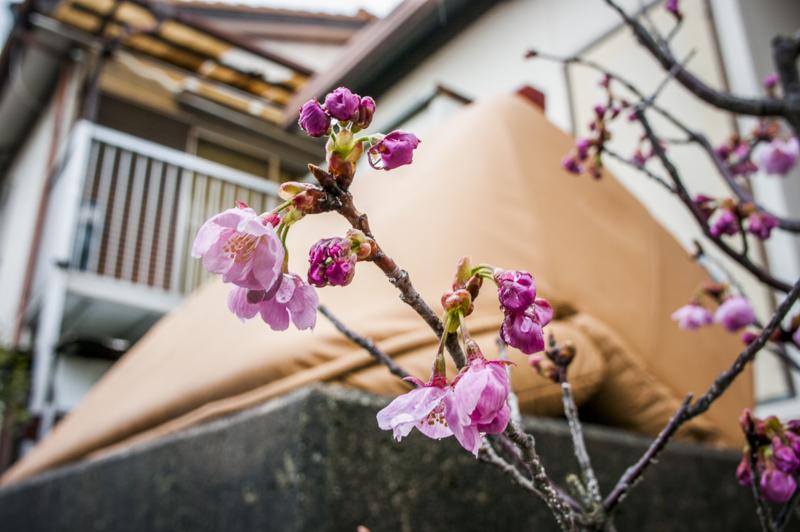 f:id:amano_shintaro:20170406221707j:plain