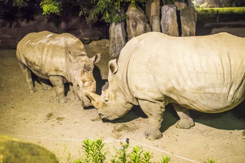 豊橋総合動植物公園のサイのライトアップ