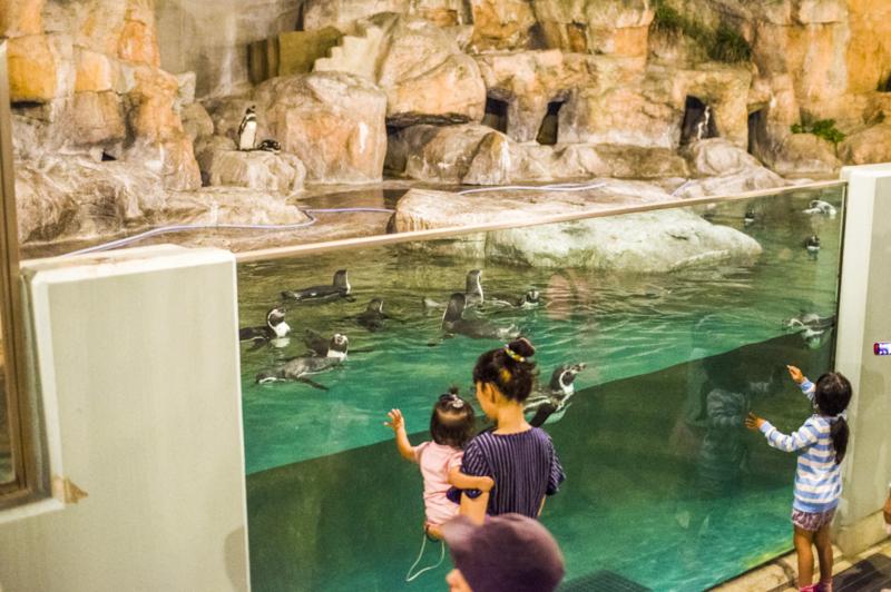 豊橋総合動植物公園のナイトZOOのペンギン