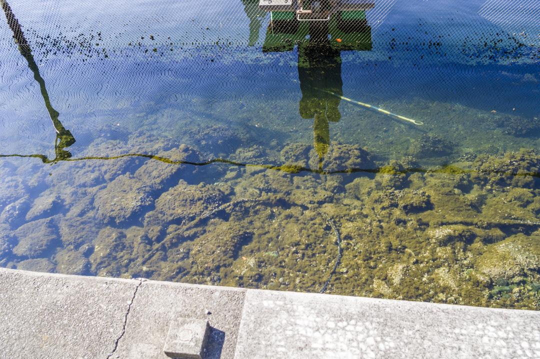 平和島競艇場 東京湾 きれいな水質