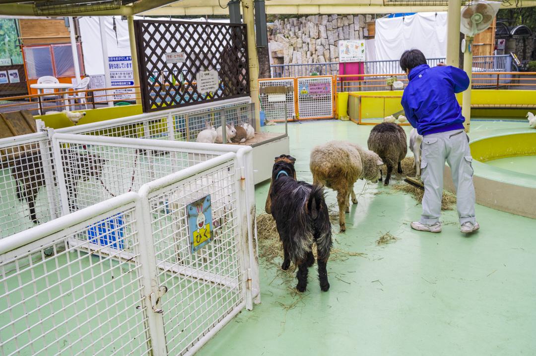 江戸川区自然動物園のふれあいコーナー