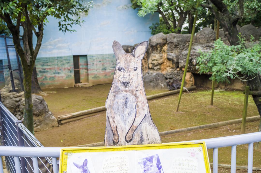 江戸川区自然動物園のベネットアカクビワラビーイラスト