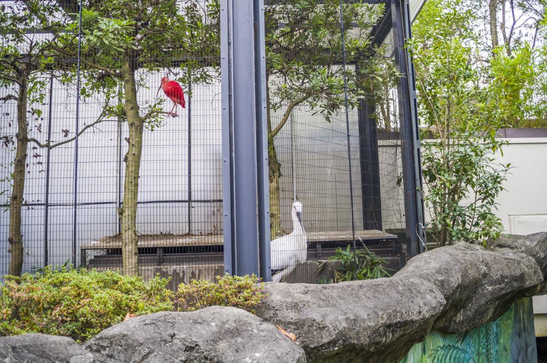 江戸川区自然動物園のコウノトリ