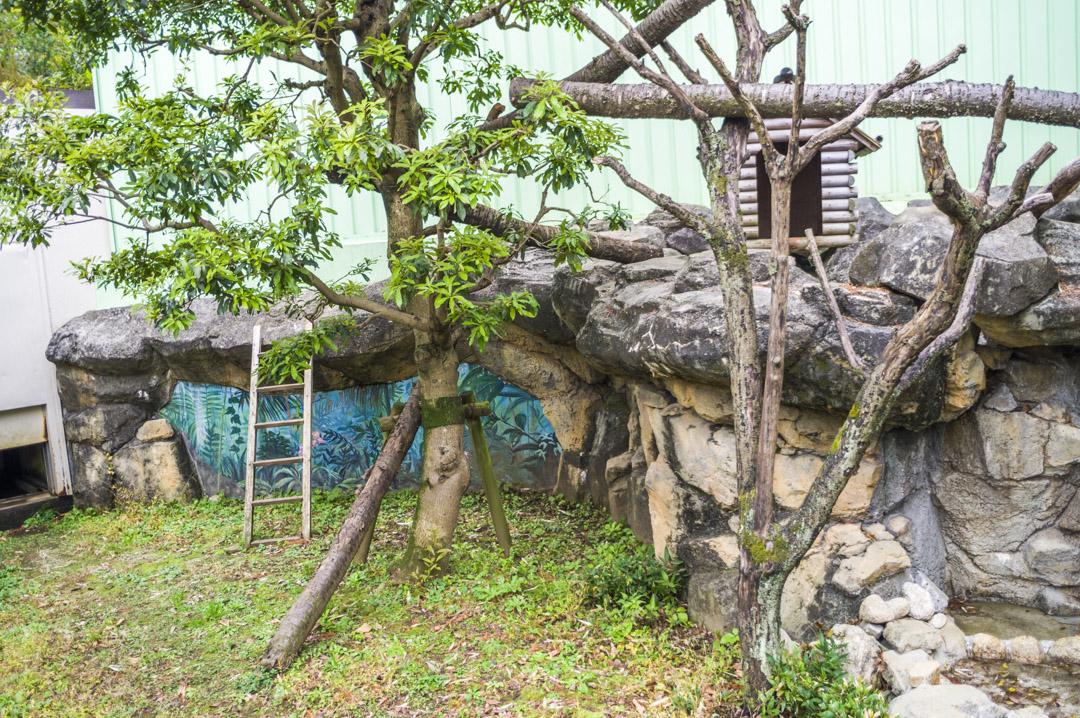 江戸川区自然動物園のレッサーパンダ